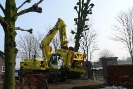 Project oude bomen verplanten
